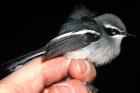 BirdPix 8267