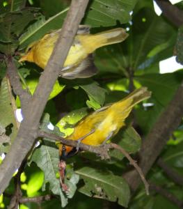 birdpix 11090