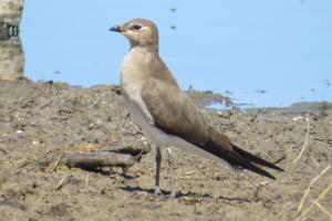 birdpix 15974