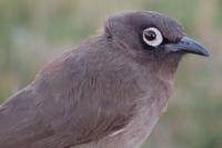 birdpix