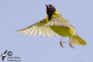 birdpix 40031