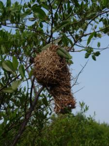 Loanga Weaver